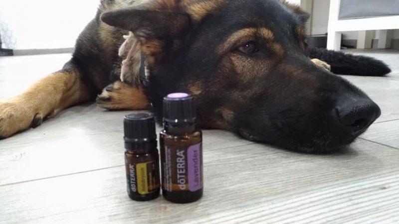 Uporaba eteričnih olj pri psih